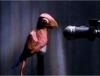 Ранняя пташка