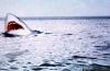 Последняя акула